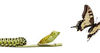 Transformationsprozesse im Unternehmen