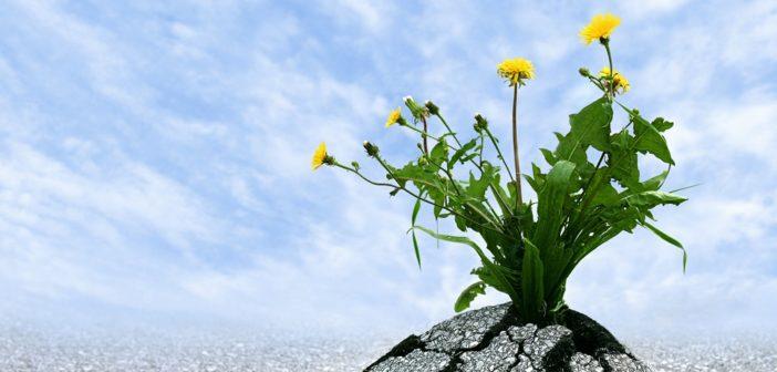 Resilienz – Stärken Sie Ihre persönliche Widerstandskraft
